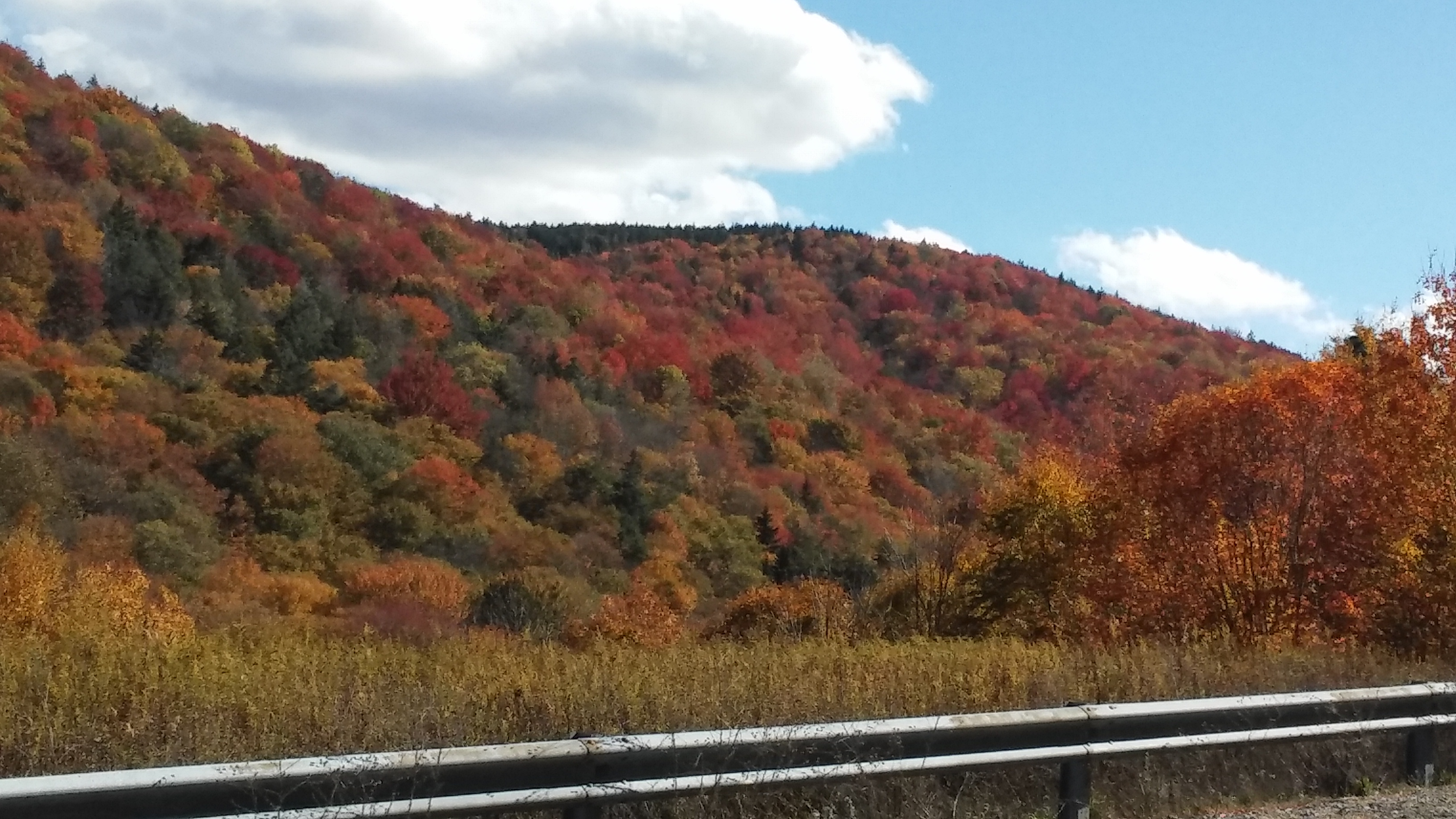Viet from the scenic highway of the Monongahela National Forest in West Virgina, showing a mix of American wood species in the fall. Photo: Randy Coots