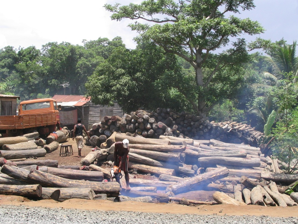 EU next? Illegally logged rosewood from Masoala and Marojejy in Antalaha, Madagascar, is being sawn and prepared for shipping. Source: Wikipedia