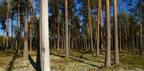 Latvian forest