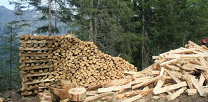 Wood pile in forest
