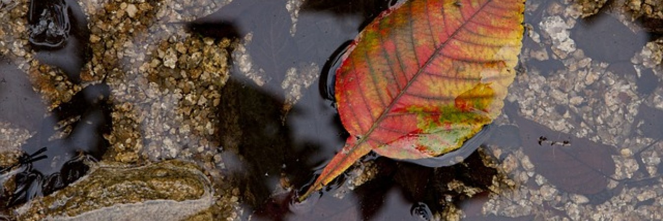 Leaf floating in stream