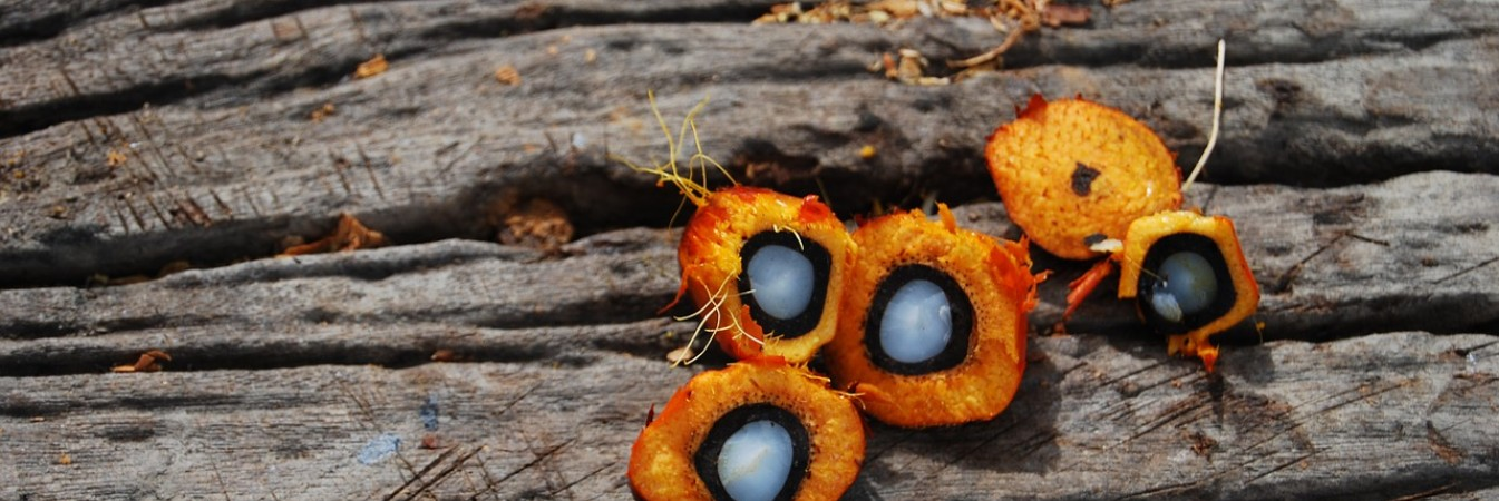 palm oil featured image