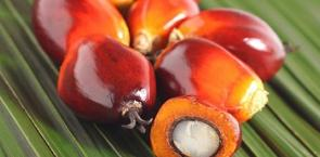 Learn about the purpose of RSPO and how it works