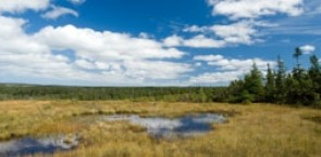Conservation and Sustainable Use of Peatlands