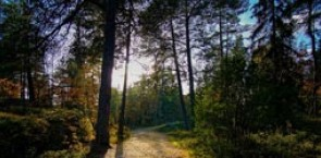 Study on implementing Sustainable Forest Management according to the EU Biodiversity Strategy and the EU Bioeconomy Strategy