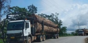 Trucks transporting logs in Gabon
