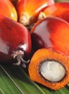 Responsible palm oil production