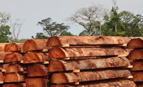 advantages and disadvantages of illegal logging