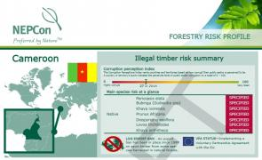 Forestry risk profile Cameroon