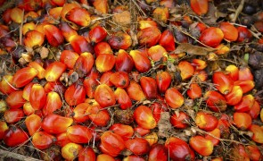 Sustainability Reporting for Palm Oil Companies