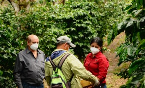 Audit at Finca San Fernando